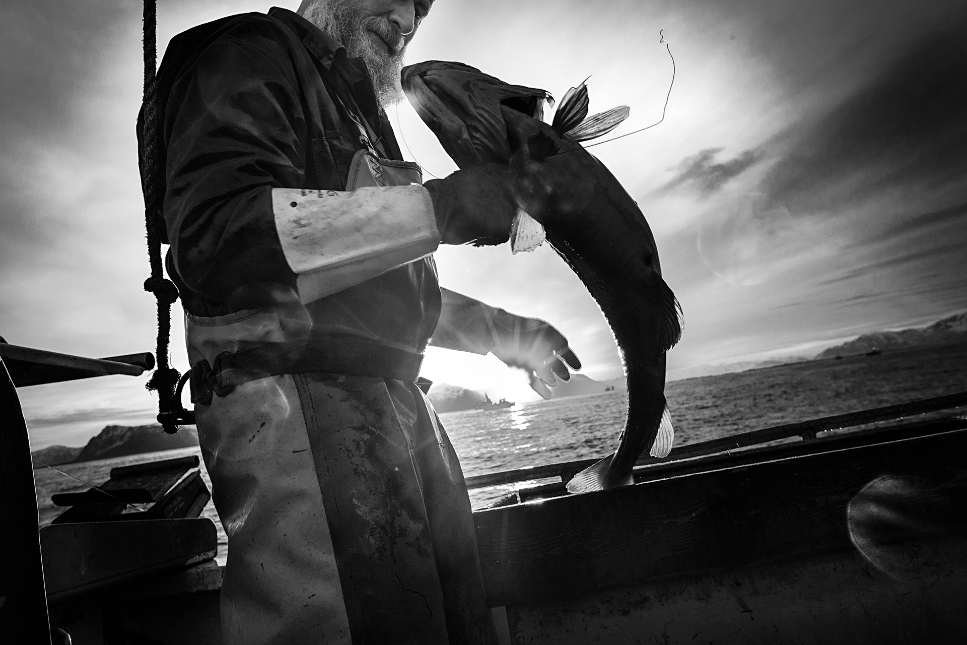 Cod fisher Kyrre Brun holds a cod in his fishing boat outside Stø, Vesterålen.